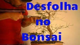 Como e por quê desfolhar Bonsai - jabuticabeira - 10