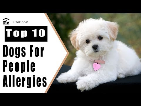 Top 10 Dogs That Don't Shed Too Much For People With Allergies