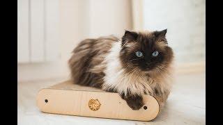 Кошки Содержание Размножение Питание Уход Сайт о Кошках