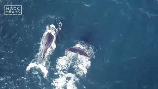 Самый редкий кит зарегистрирован в акватории заповедника «Командорский» | Новости сегодня