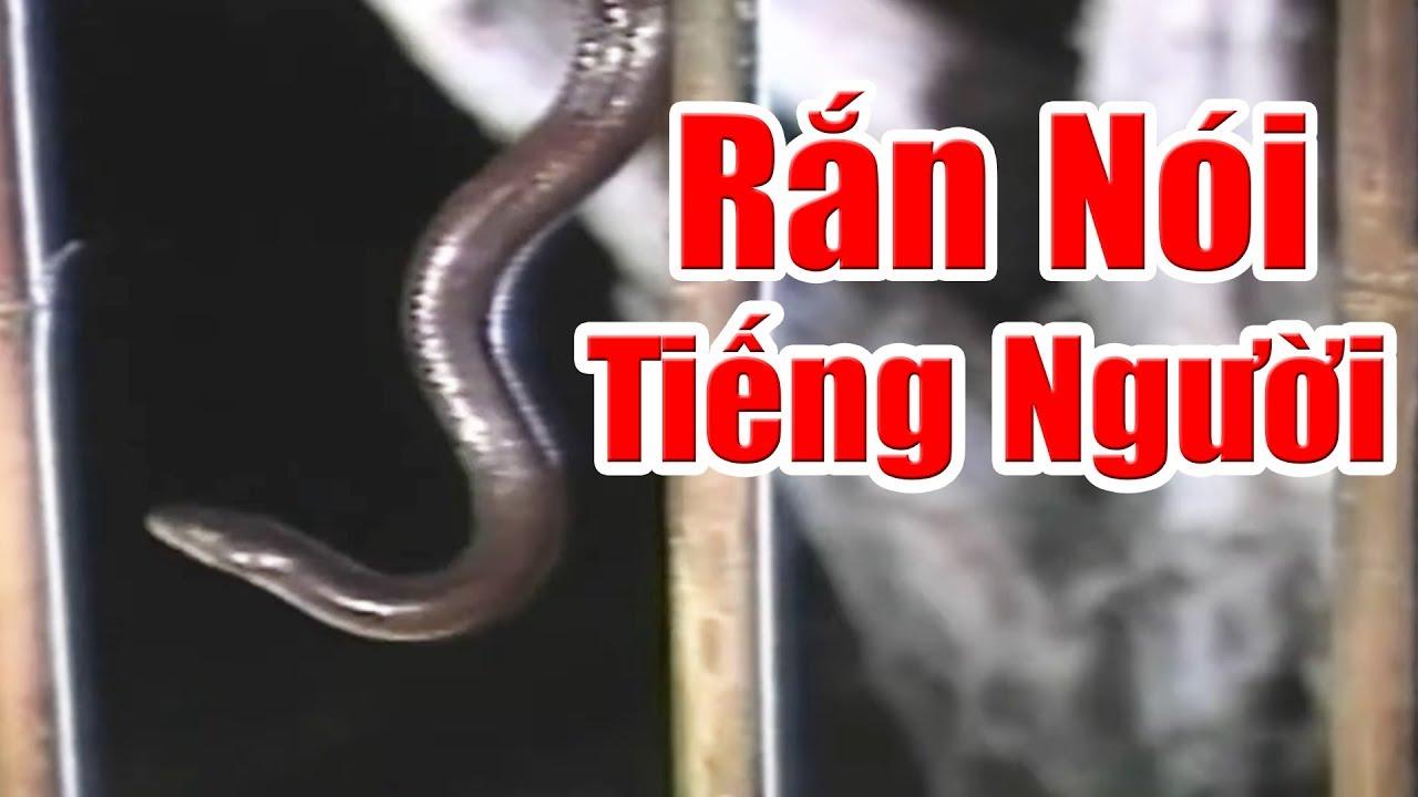 Rắn Nói Tiếng Người Và Hòn Ngọc Châu Báu - Phim Cổ Tích Việt Nam Xưa Cũ, Chuyện Cổ Tích Việt Nam