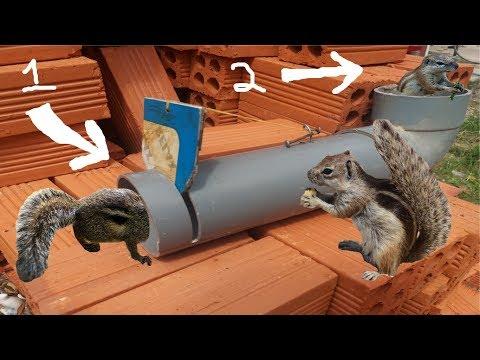 Tự Chế Bẫy Sóc Bằng Ống Nhựa PVC Thành Công 100% .Bẫy Sóc Bông Đơn Giản Nhất .Squirrel Trap Plastice