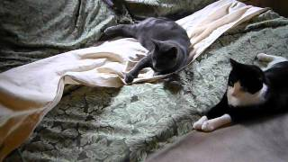 A Saturday Morning - Marcel And Abby Mess Up My Bed