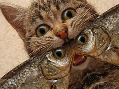 Как приготовить тесто для рыбалки на карася. Как приготовить ...