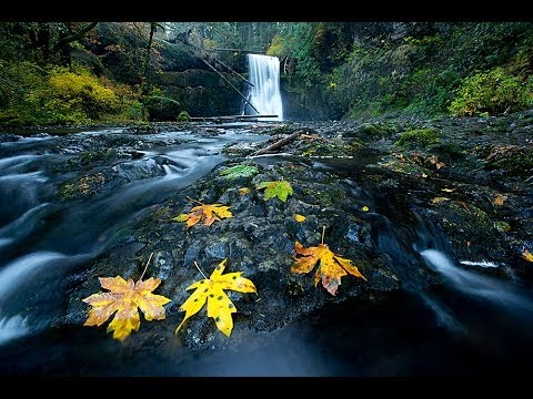 Waterfall Leaf Ep 343: You Keep Shooting with Bryan Peterson: Adorama Photography TV