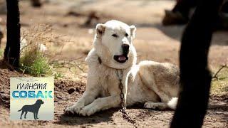 Акбаш. Планета собак 🌏 Моя Планета