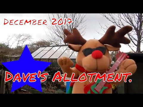 Dave's Allotment. Christmas Potato Reveal Epic Fail, Horror Rudolph & Cuppa's.