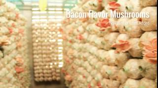 BACON MUSHROOMS by Sonoran Mushroom Company in Tucson, AZ
