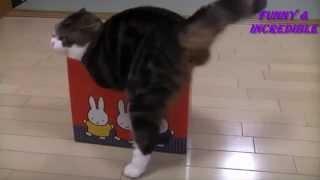 All animals love box - Все животные любят коробки