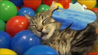 Коты плавают