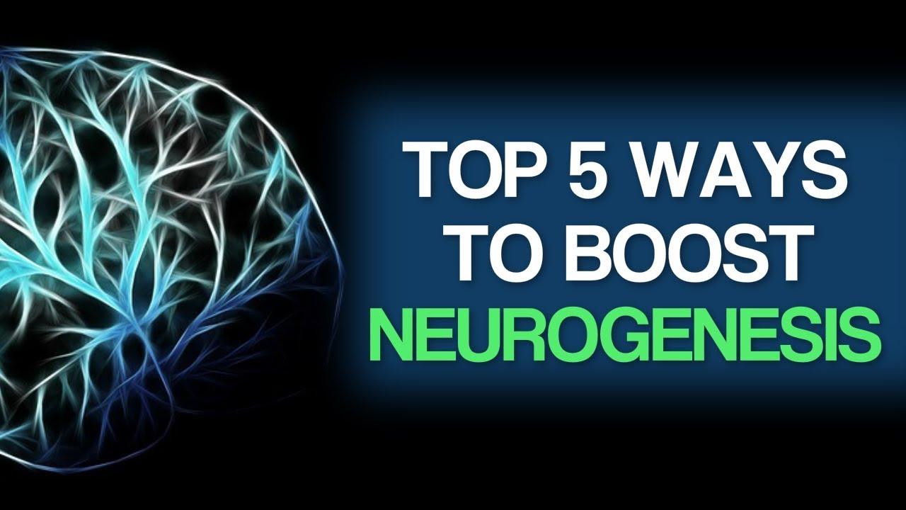 Top 5 Ways To Boost Neurogenesis