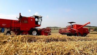 Zbiory pszenicy 2017 IIPaulina&MagdaII