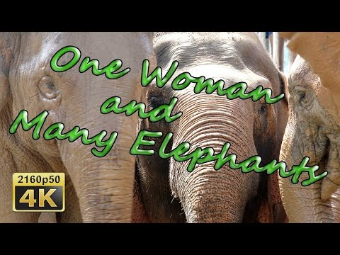 Chiang Mai, Elephant Nature Park - Thailand 4K Travel Channe