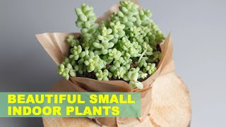 9 Small Indoor Plants To Bring Beauty Into Your Home