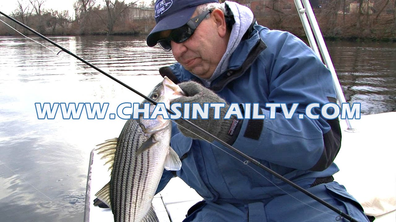 River fishing for striped bass with soft plastic baits for Chasing tails fishing report