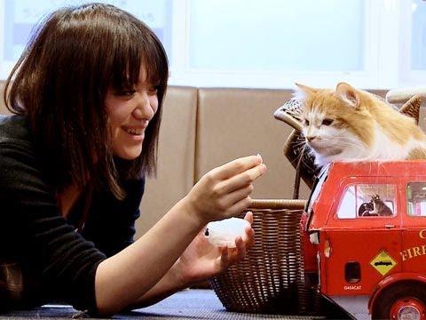 Tokyo's Cat Cafe