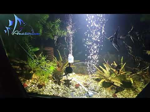 DIY wooden air diffuser for aquarium. Test🐟Самодельный распылитель воздуха в аквариуме. Тест.