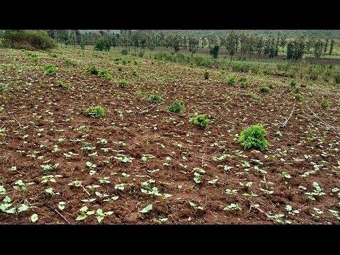 Global Food Assistance Outlook Brief (April 2017)