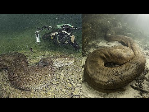 10 Shocking Discoveries Made by Deep Sea Divers