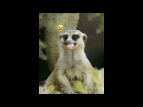 Video lucu buat status Wa durasi Pendek