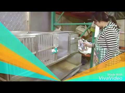 大楊梅吉娃娃犬舍105.11.25犬舍清潔消毒
