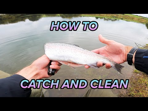 How To Catch And Clean Trout | Fly Fishing At Scout Dike Reservoir
