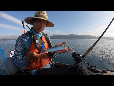Using the MOST HATED FISH of All Time as Bait (And Catching Big Fish with It)