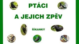 Ptáci a jejich zpěv - říkanky - pro děti - 1.část