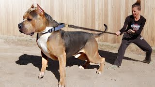 These Are 10 Most Dominant Dog Breeds