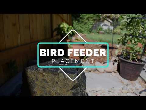 squirrel-proofing-your-bird-feeders