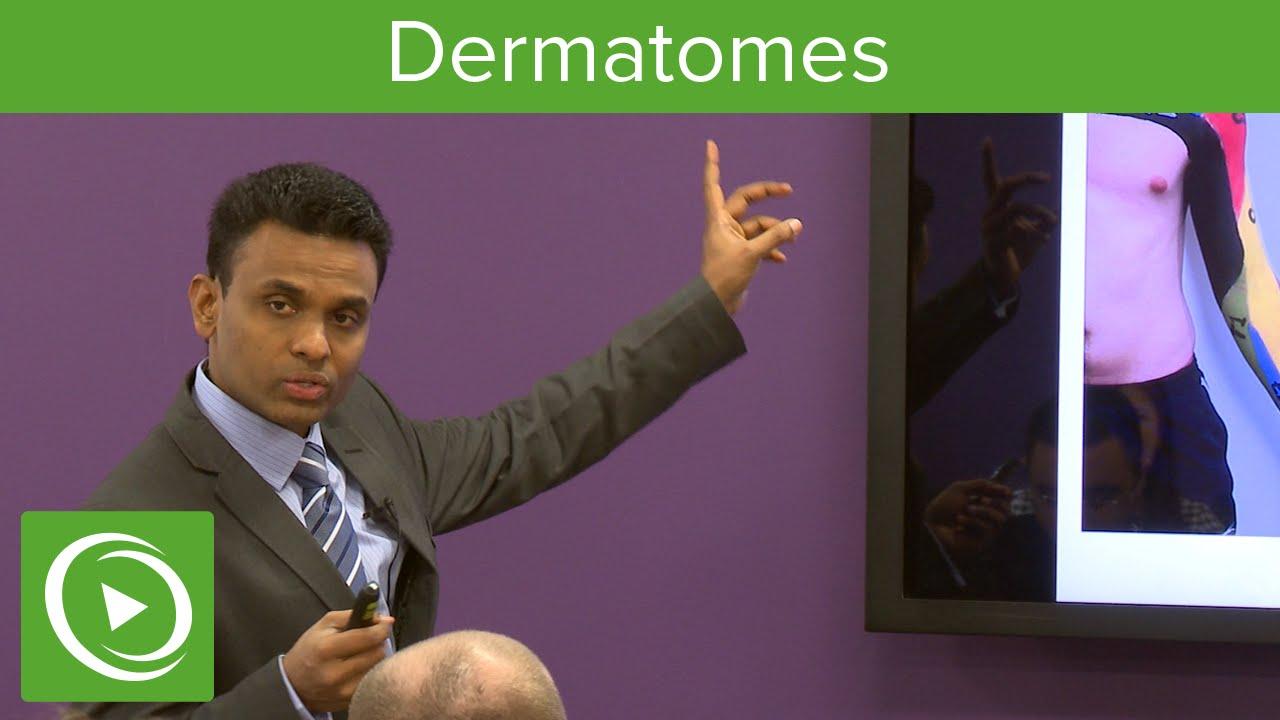 Dermatomes: Overview  – MRCS | Lecturio