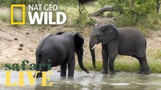 Safari Live - Day 124 | Nat Geo Wild