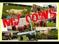 MartinH Collection - My cows by Schleich, Papo, Safari Ltd., Mojo