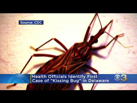 'Kissing Bug' Documented In Delaware, CDC Says
