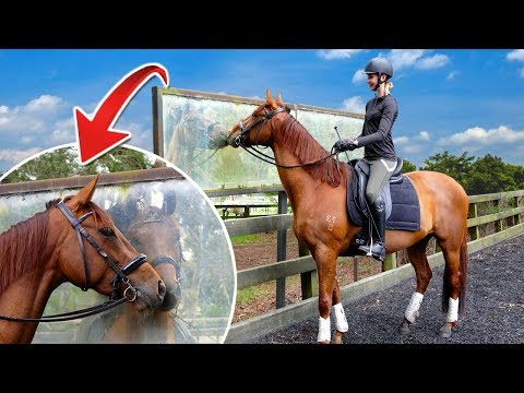 FIRST RIDE ON MY 4YO HORSE AFTER 8 MONTHS OFF! | Groom, Tack Up & Ride With Me!