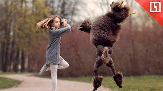 Собаки танцуют брейк