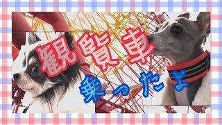 和歌山県和歌山市にある『ポルトヨーロッパ』は何と入場料無料! しかも...