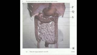 BIOLOGY PAPER 3 (PRACTICAL) KAKAMEGA EAST DIST KCSE