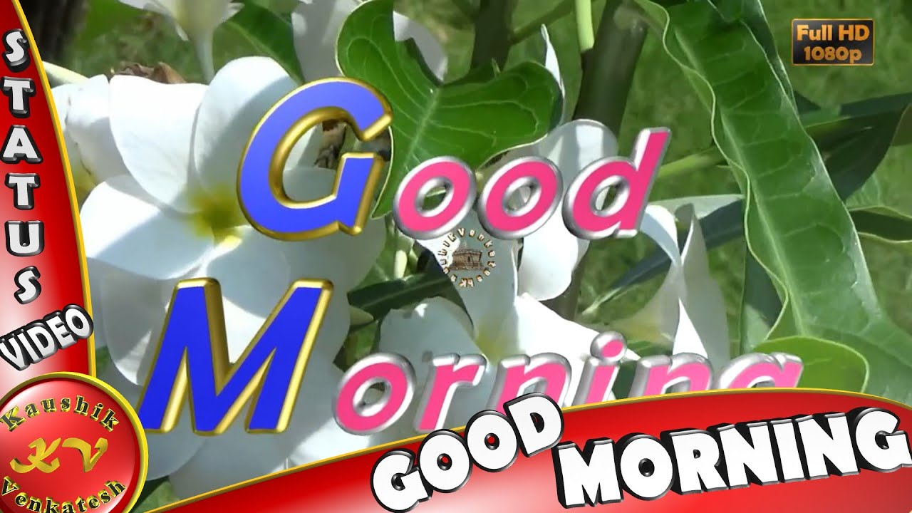 Good Morning Wishes Whatsapp Video Greetings Animation Messages