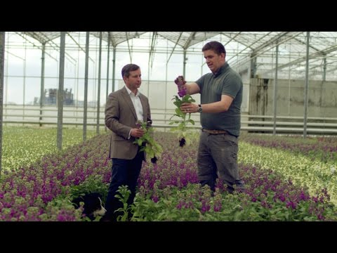 M&S Flowers: Meet The Growers