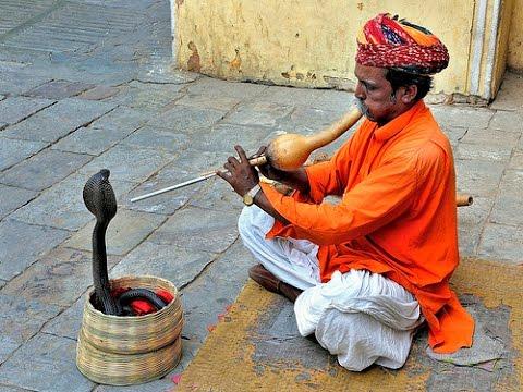 Indian snake - Snake charmer of India