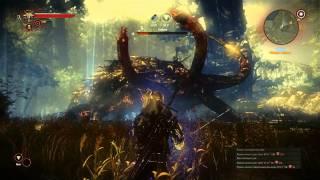 Ведьмак 2: Глава I, задание Кейран: тенекост (2)