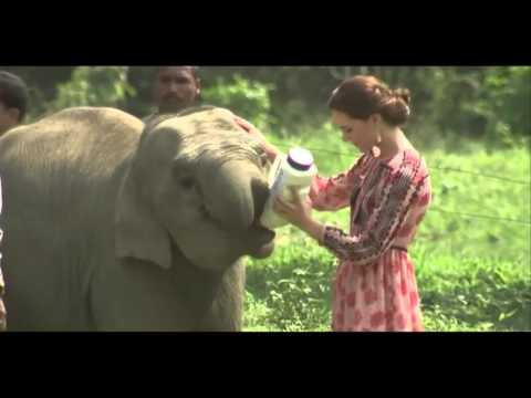 Royal Family Feeds Baby Rhino & Elephant
