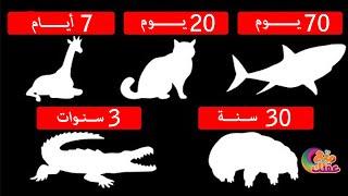 لن تصدق المدة التى يمكن ان يعيشها كل حيوان بدون طعام  - أحدهم يعيش بدون طعام لـ 10 سنوات !