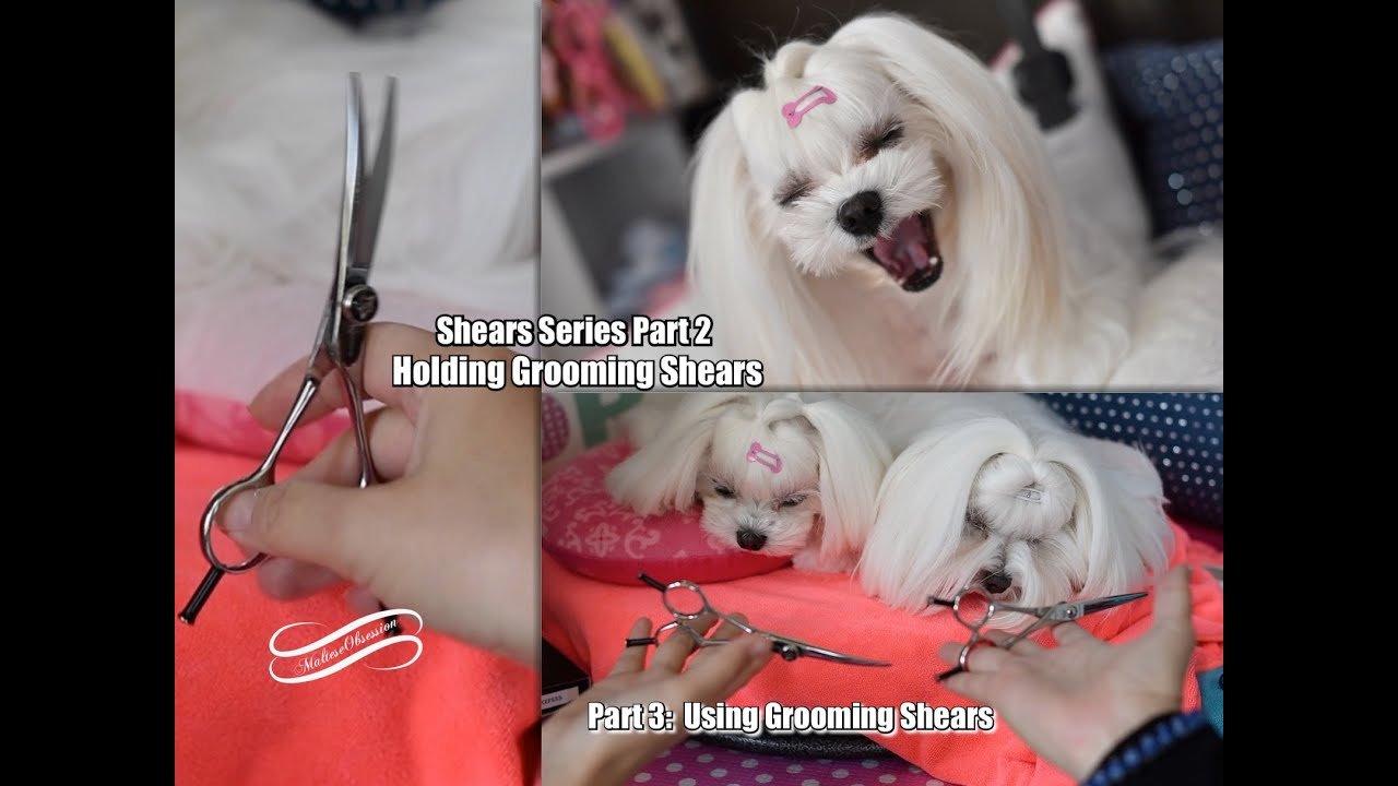 GROOMING: SHEAR SERIES 12 - Maltese Grooming Scissors HOW TO HOLD Dog  Grooming Shears EXO Chen Piano