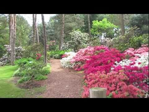 Peak Blooming Time At Brueckner Rhododendron Garden Mississauga Canada
