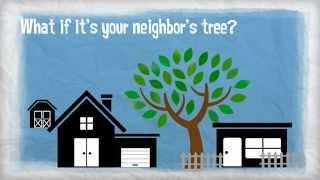 Insurance 101 - Tree Damage