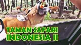 Bersafari di Taman Safari Indonesia 2 Prigen Pasuruan