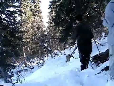 Провалился в берлогу! Или как НЕЛЬЗЯ охотиться! Пнул крупного медведя по морде!