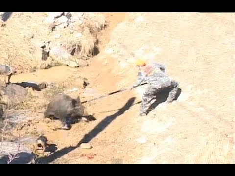 SPEAR HUNTING For GIANT RUSSIAN BOAR! With South Coast Safaris